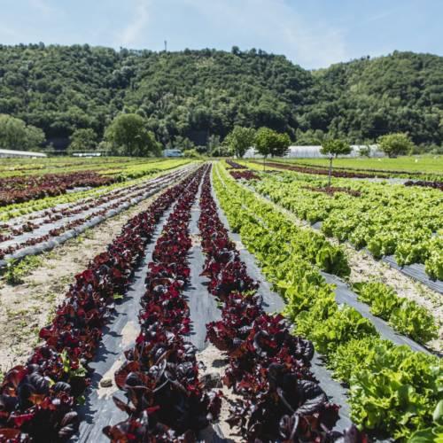 Zone de production_Les jardins de la côte rôtie_Les Roches de Condrieu