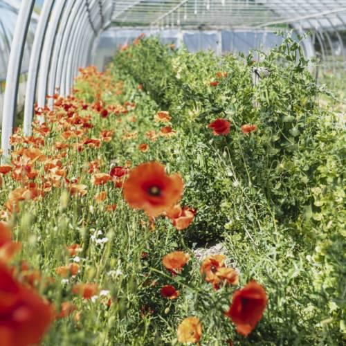 Zone de production_Les jardins de la côte rôtie_Reventin Vaugris
