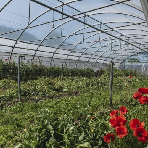 Zone de production_Les jardins de la côte rôtie_Tupin et Semons