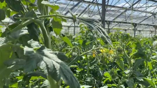 Jardin de la cote rotie image pour video GAEC les primeurs d'ampuis